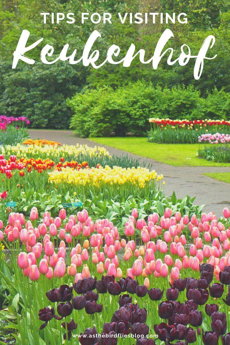 e262c1c94c646632b24797648e496401 - Tours From Amsterdam To Keukenhof Gardens