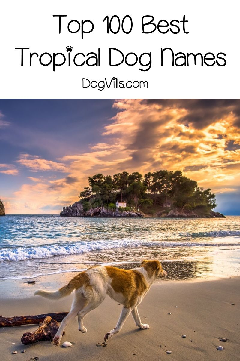 100 Tropical Dog Names For Male Female Pups Dogvills Dog