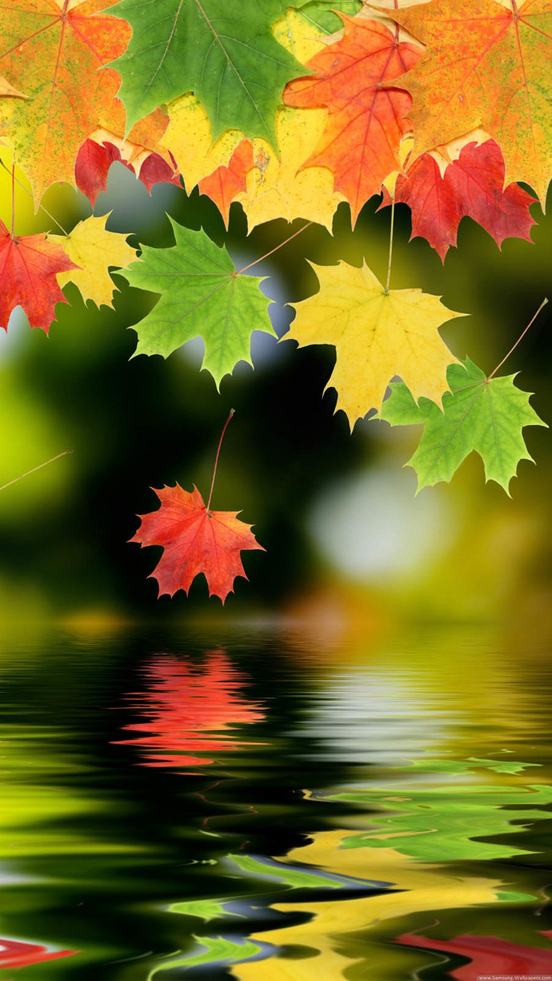 Colorful Autumn Maple Leafs Iphone Hd Wallpaper 秋の壁紙