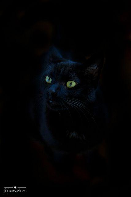 Black cat magik kitten