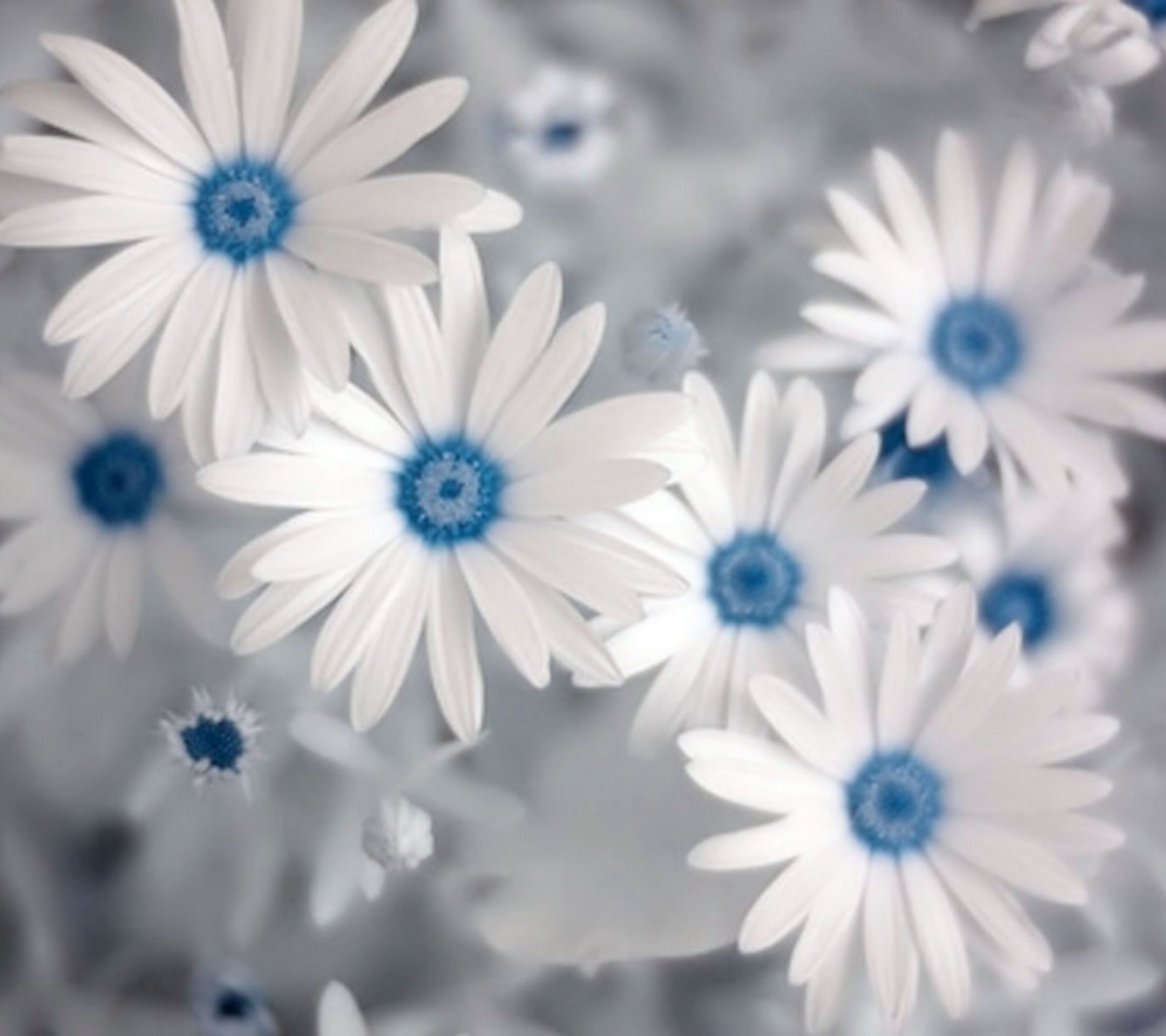 Contemporary blue and white flowers motif best evening gown calming flowers flowers pinterest flower flowers and flower power izmirmasajfo