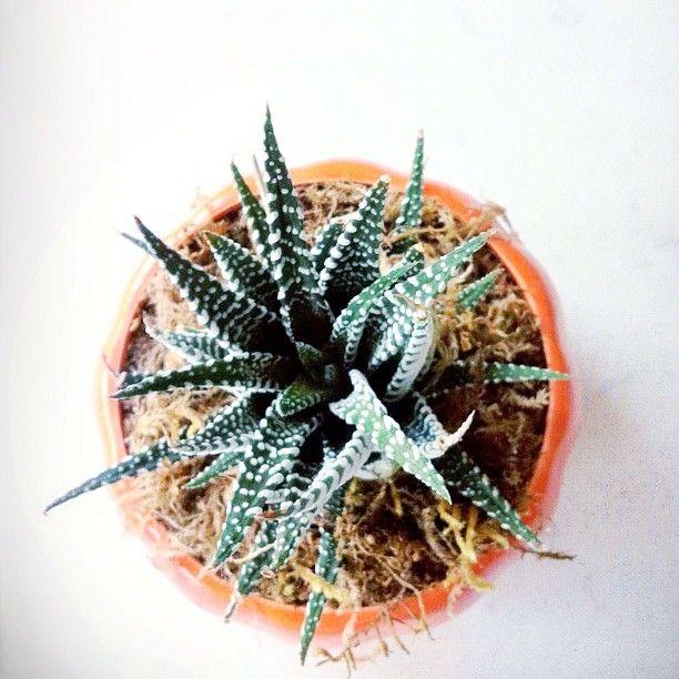 i <3 succulents.