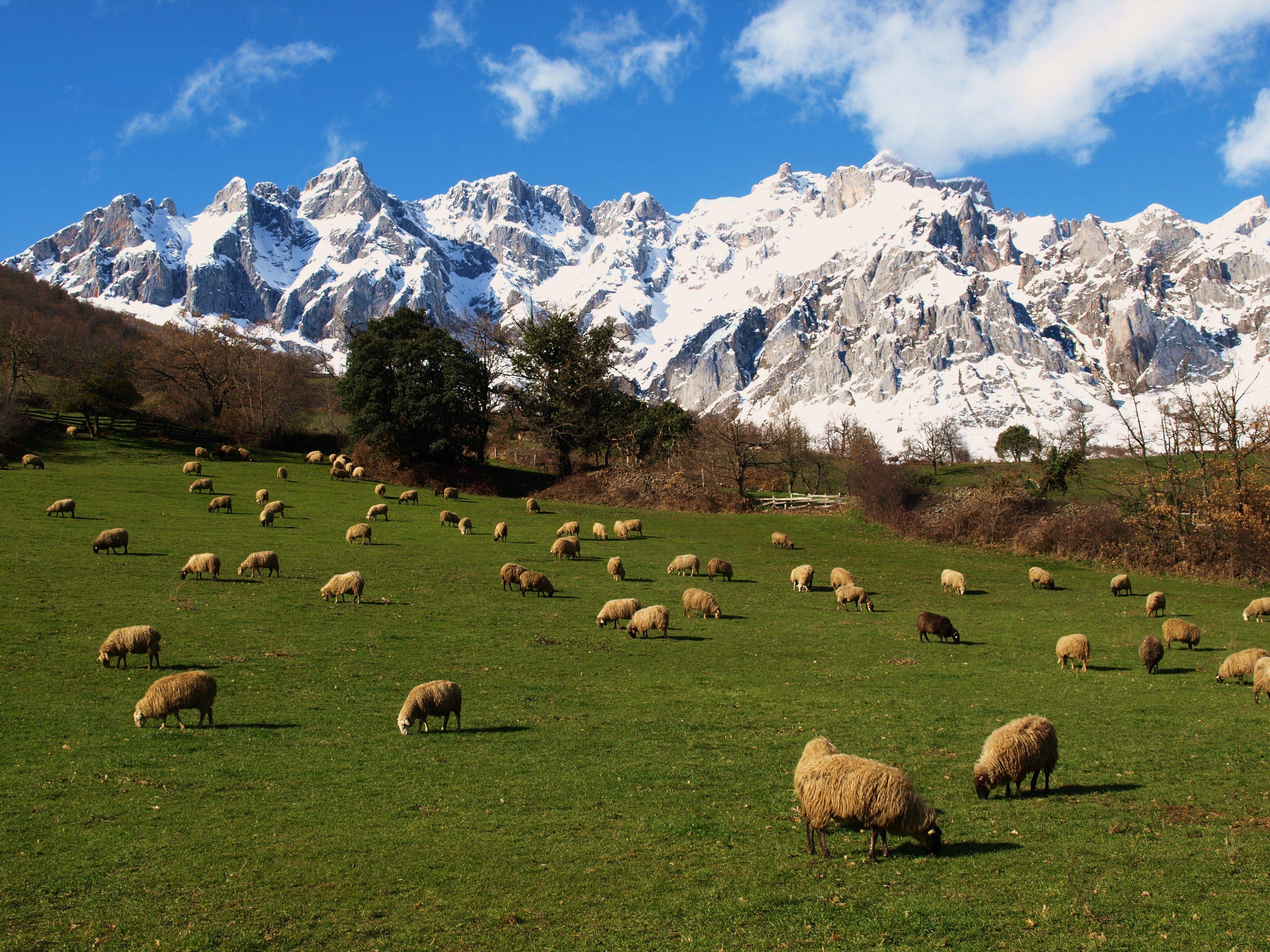Camaleño Cerca De Los Picos De Europa Que Mas Puedes Pedir Liebanízate Picos De Europa Asturias Picos De Europa Parques Nacionales De España