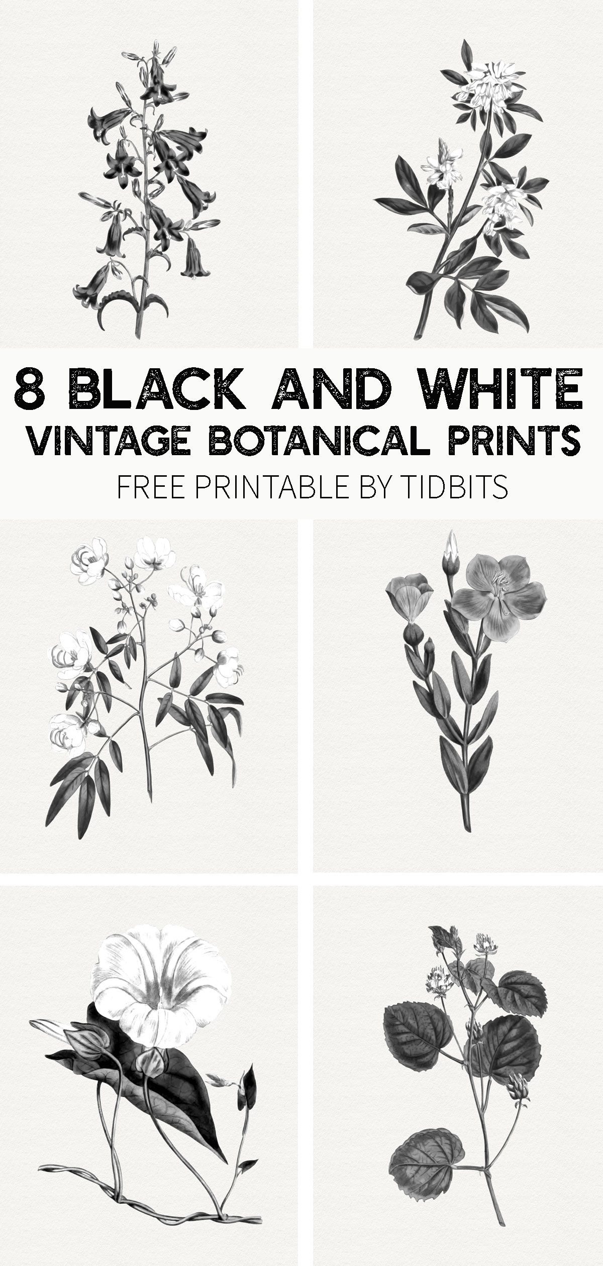 Beautiful and minimalistic wall art - grab your free black and white vintage botanical prints, by TIDBITS. #blackandwhite #botanical #botanicals #vintage #vintagebotanicals #camitidbits #blackandwhitebotanicals #botanicalprints #botanicalsprintable #printable #freeprintables
