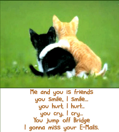 30e43075 Funny Friendship Quotes and Sayings with Cute Cats Pictures for ...