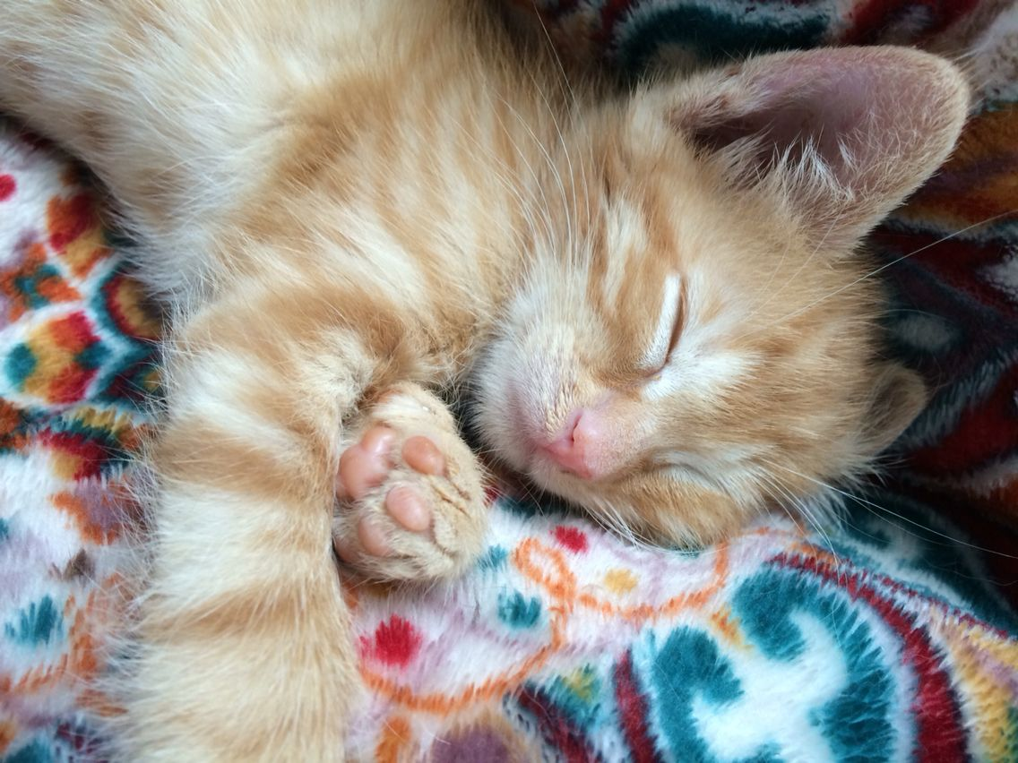 Baby Orange Foster Kitten About 6 Weeks Old He Is From A Litter Of Seven Kittens I Haven T Named Him Yet But He Is So Cud Foster Kittens Kittens Baby Orange