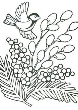 Раскраска Воробей и мимоза, скачать и распечатать ...