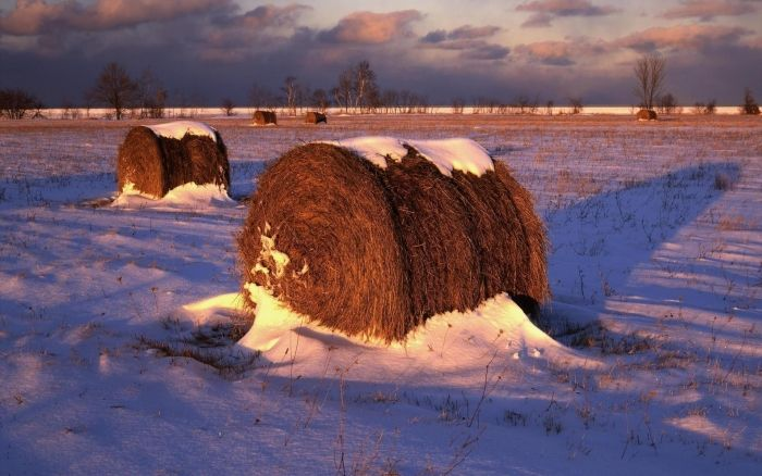 Frosted Mega-Wheats