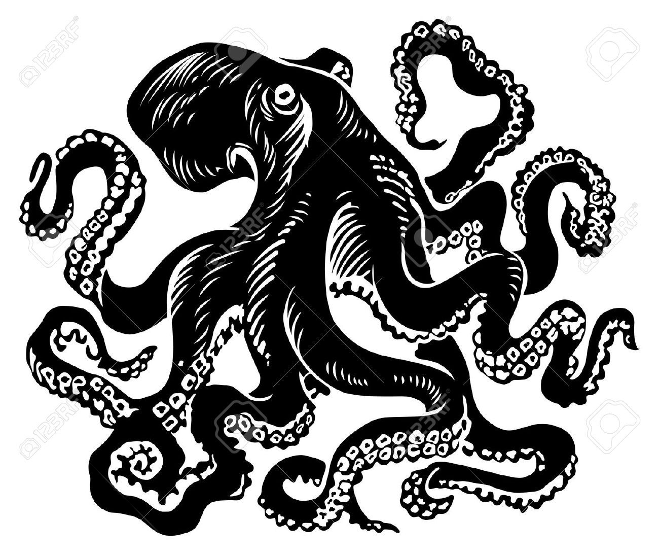 Octopus Illustration Octopus Vector Illustration | octopus ...
