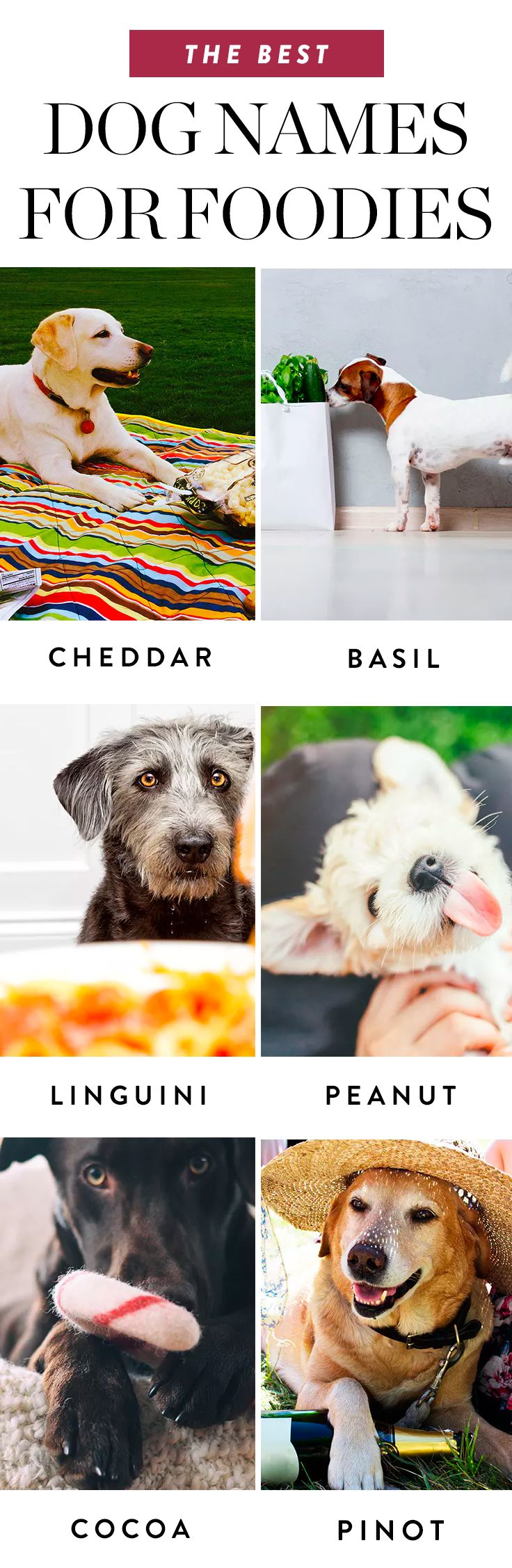 The Best Dog Names For Foodies Best Dog Names Dog Names Dogs