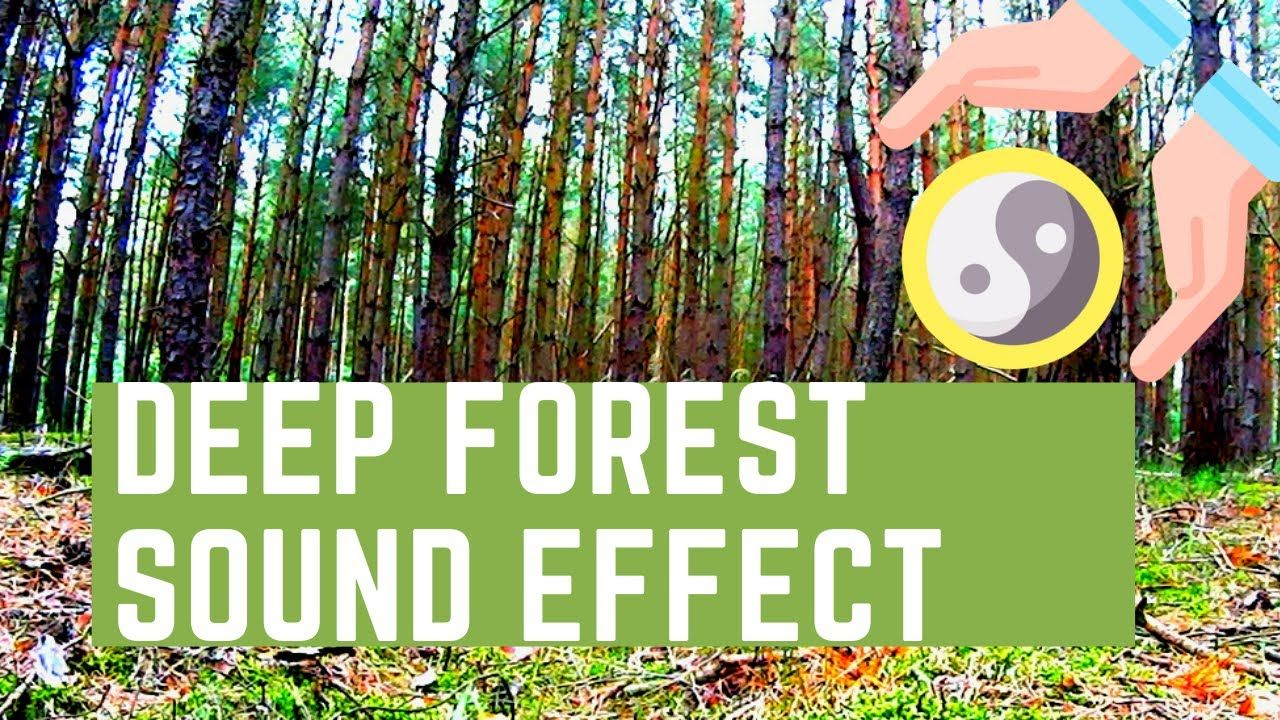 deFOREST SOUNDS RUSTLING LEAVES Wind Sound Effect