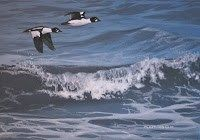 """""""Over the Waves"""" - Original Fine Art for Sale - © Peter Mathios"""