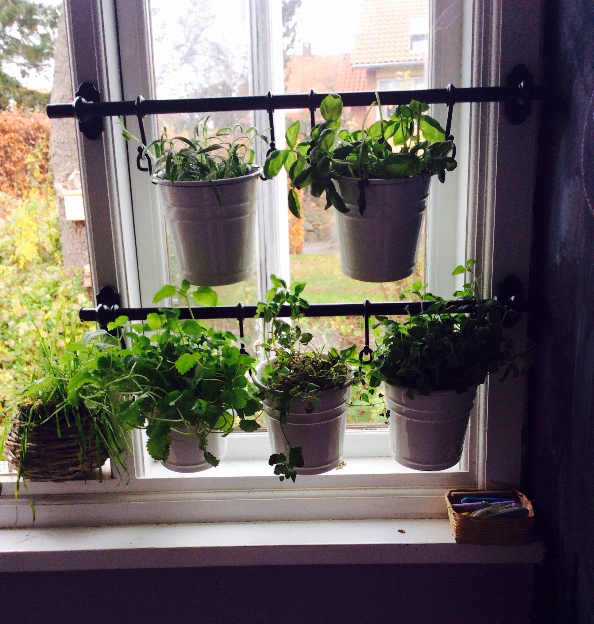 Simple Kitchen Garden: A Tiny Winter Herb Garden In My Kitchen
