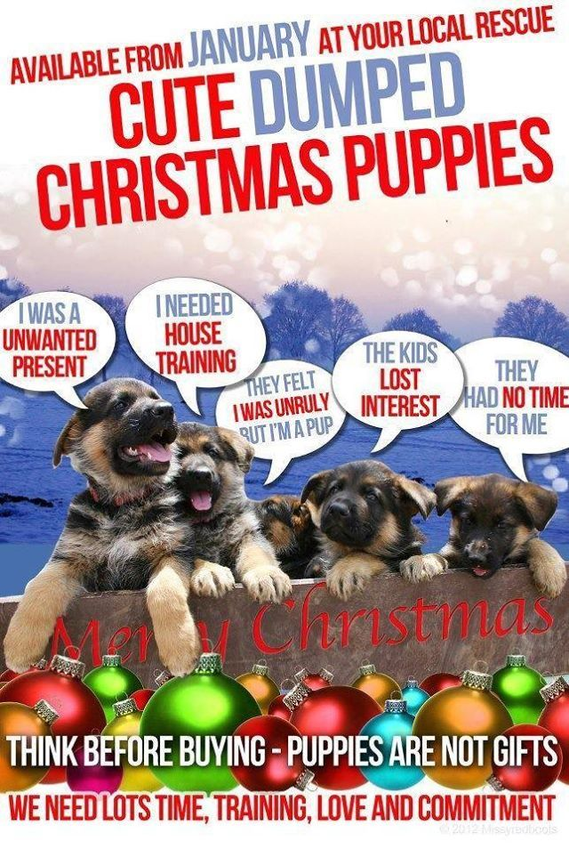 Available From January At Your Local Rescue Cute Dumped Christmas Puppies Think Before Buying Puppies Are Not Gifts Christmas Puppy Puppies Buy Puppies