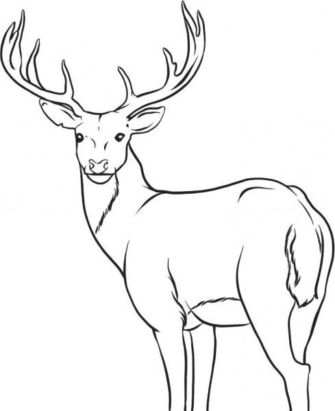 Realistic Reindeer Coloring Pages Pictures Deer Head Coloring ... | 600x489