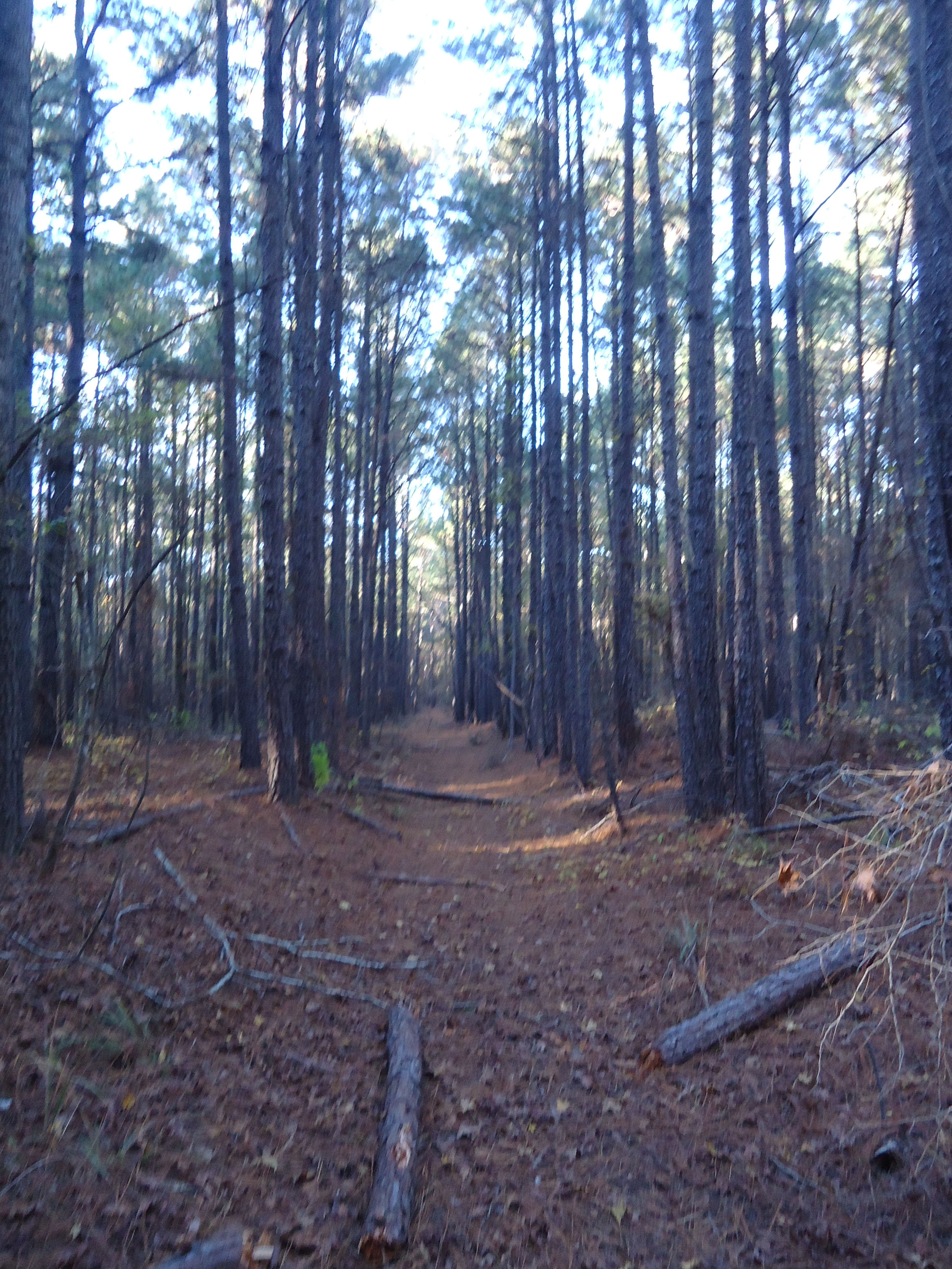trail we rode four wheelers on in the woods, it was sooo pretty!