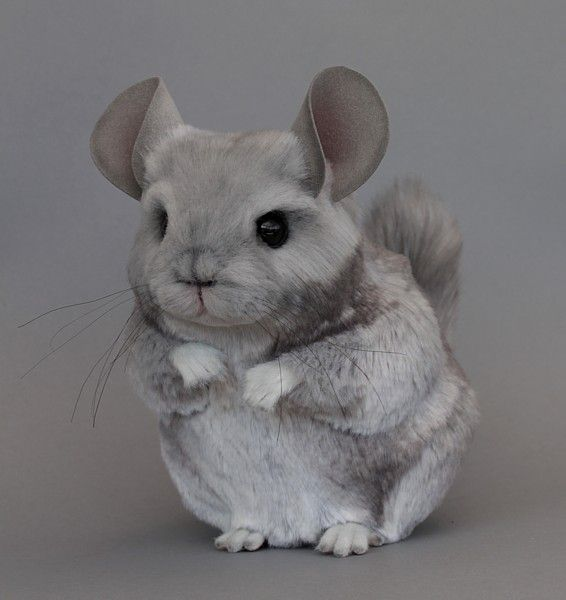 Wow First Stuffed Chinnie I Ve Seen That Looks Realistic By Lisa