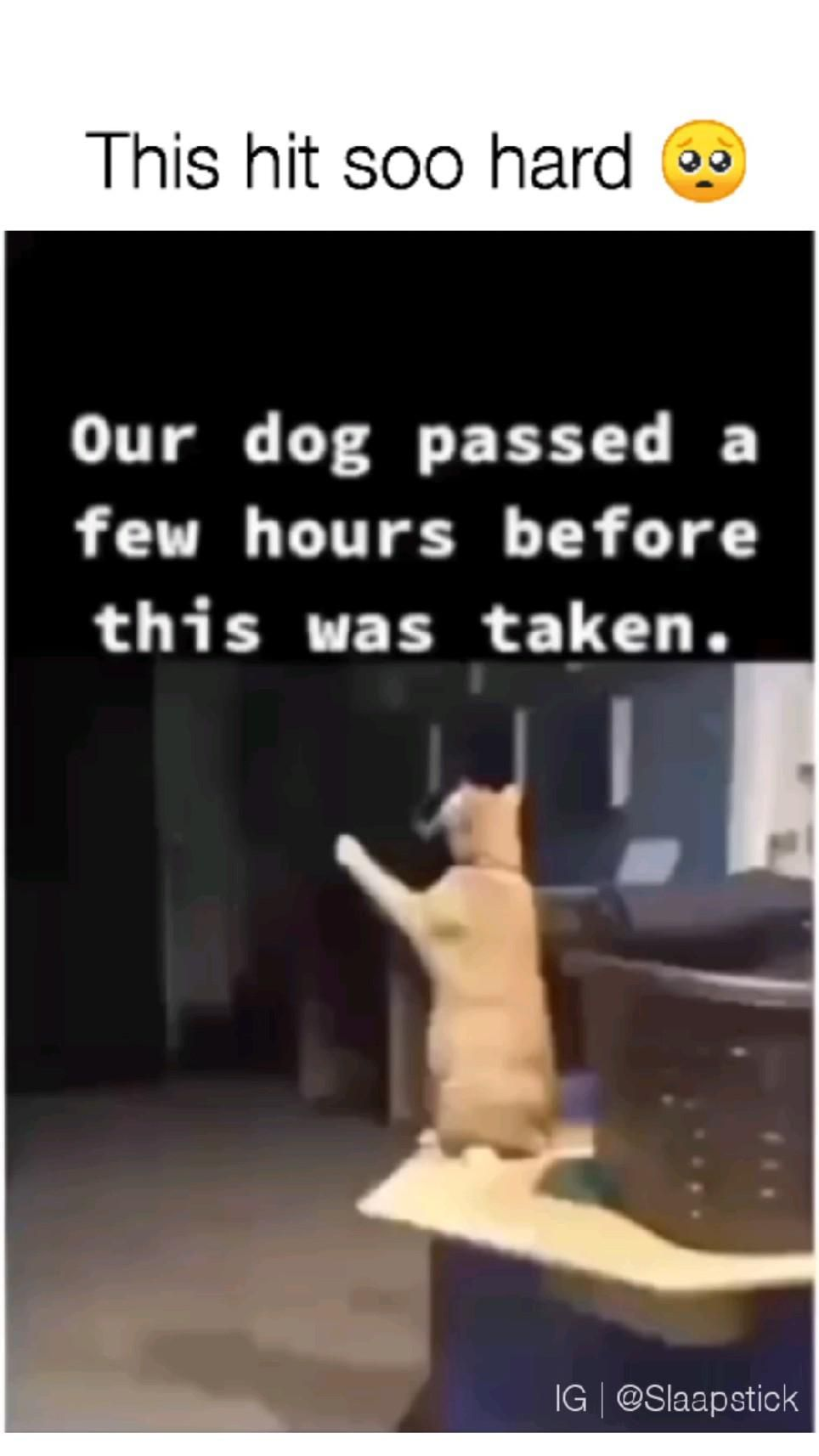 This made me cry 😭 #hearttouching #animals #animalslove