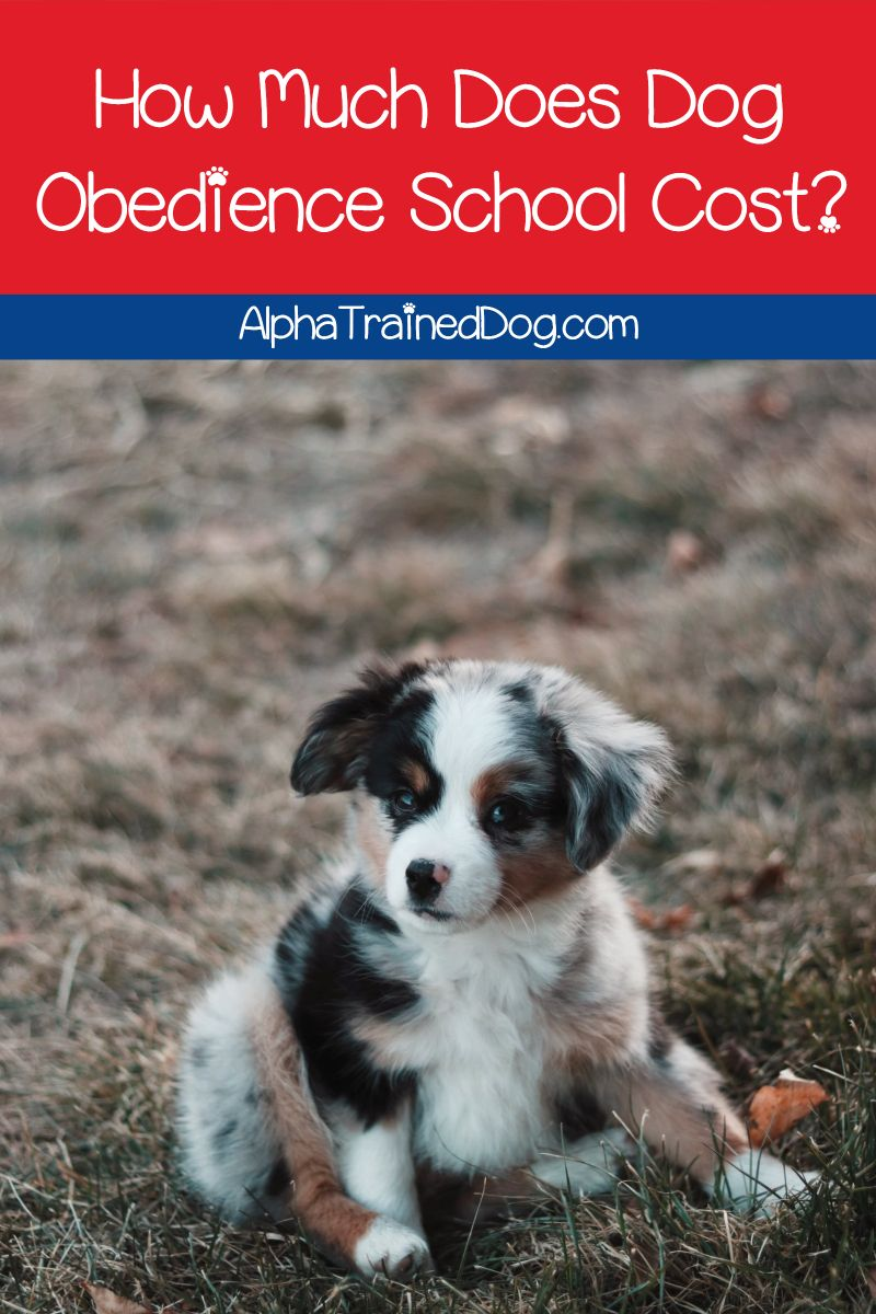 How Much Does Dog Obedience School Cost Find Out The Typical Fee