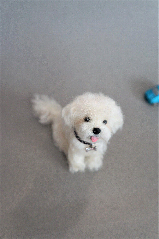 Needle Felted Maltese Dog Wool Maltipoo Puppy Felt Animal