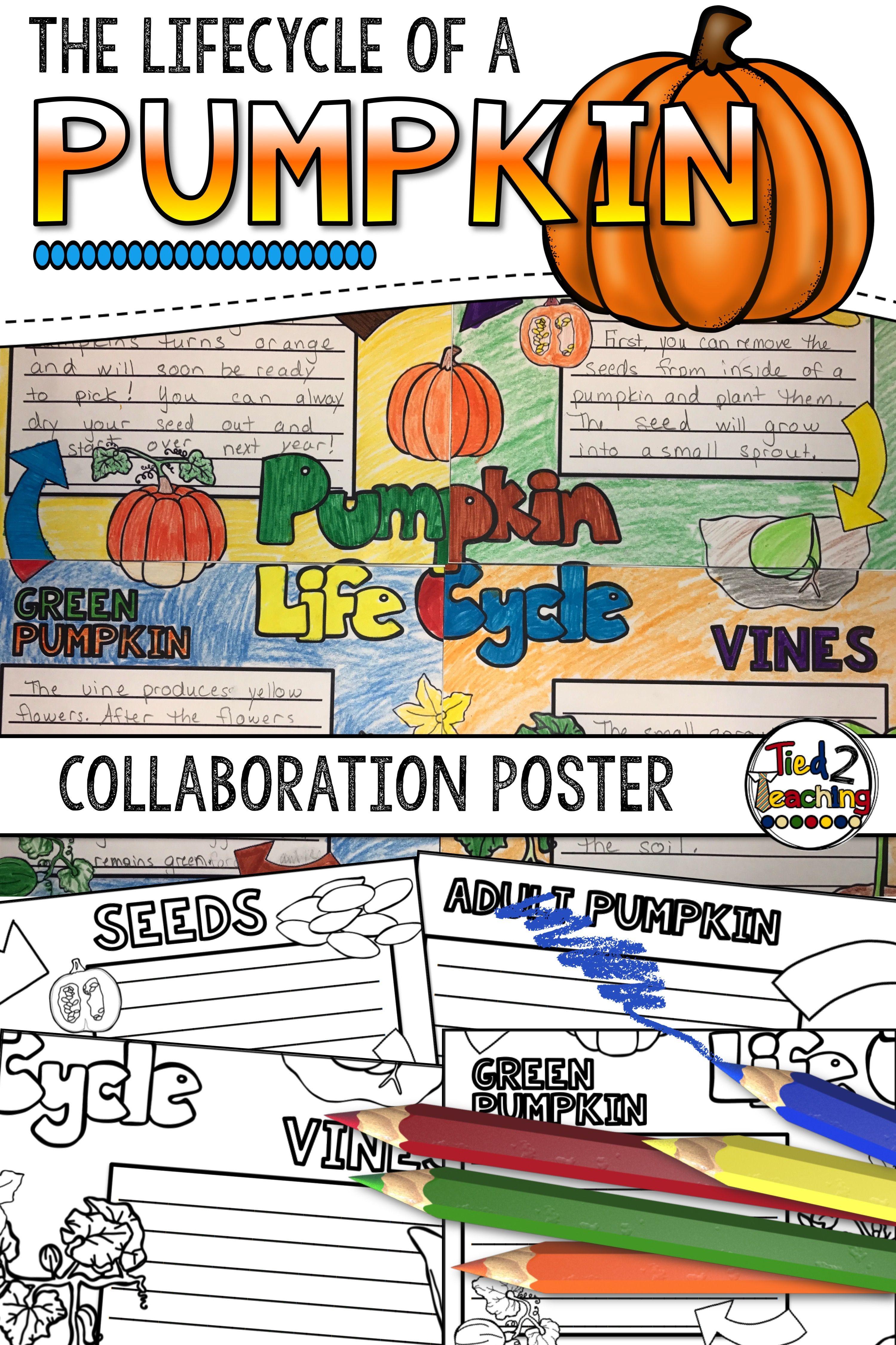 Pumpkin Life Cycle Activity Collaborative Poster