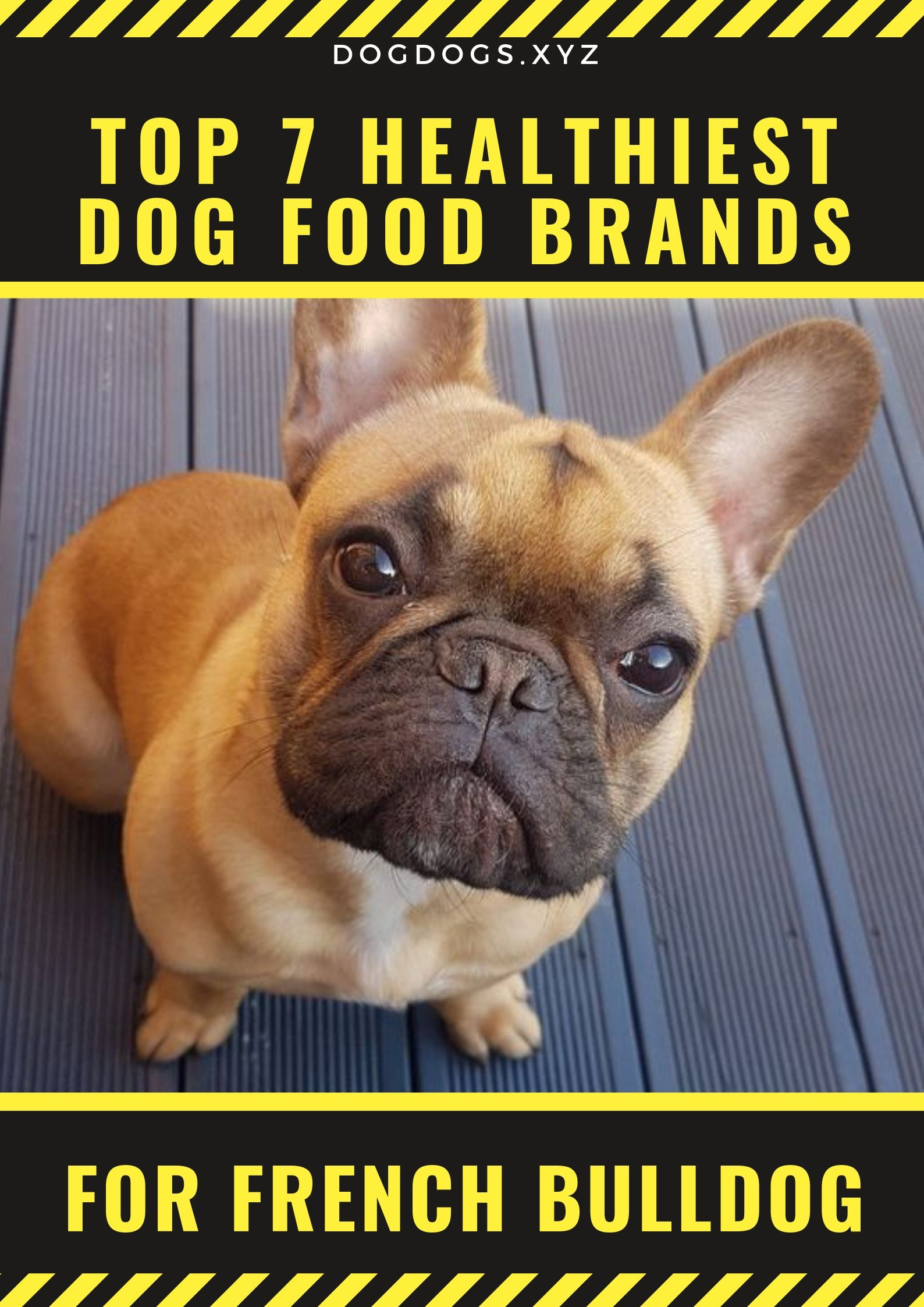 Our French Bulldog Are Our Family Members Too This Is One Of The