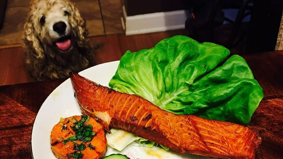 Can Dogs Eat Salmon? Is Salmon Good or Bad for Dogs? in ...