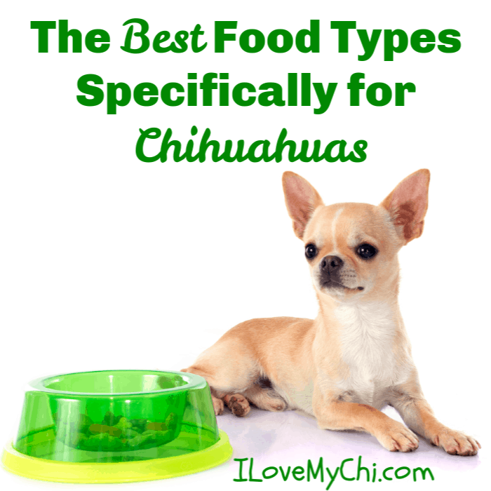 The Best Food Types Specifically For Chihuahuas Dog Food Recipes Chihuahua Best Dog Food