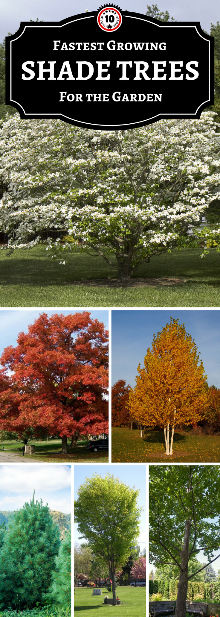 Garden landscape trees  TOP  Fastest Growing Shade Trees  Gardens Landscaping and Yards