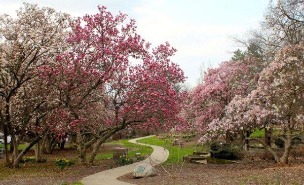 Spring Blossoms At Eden Park 365 Cincinnati Eden Park Ohio Trees Park