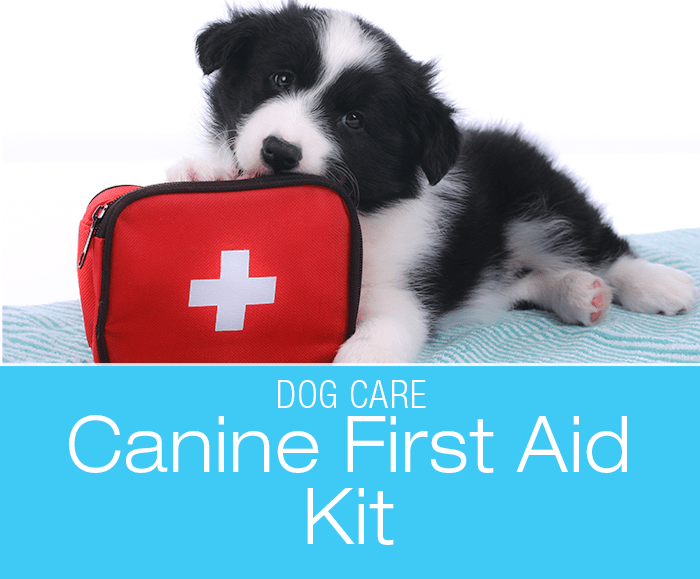 Dog First Aid Kit What's In Yours? Dog wound care, Dog