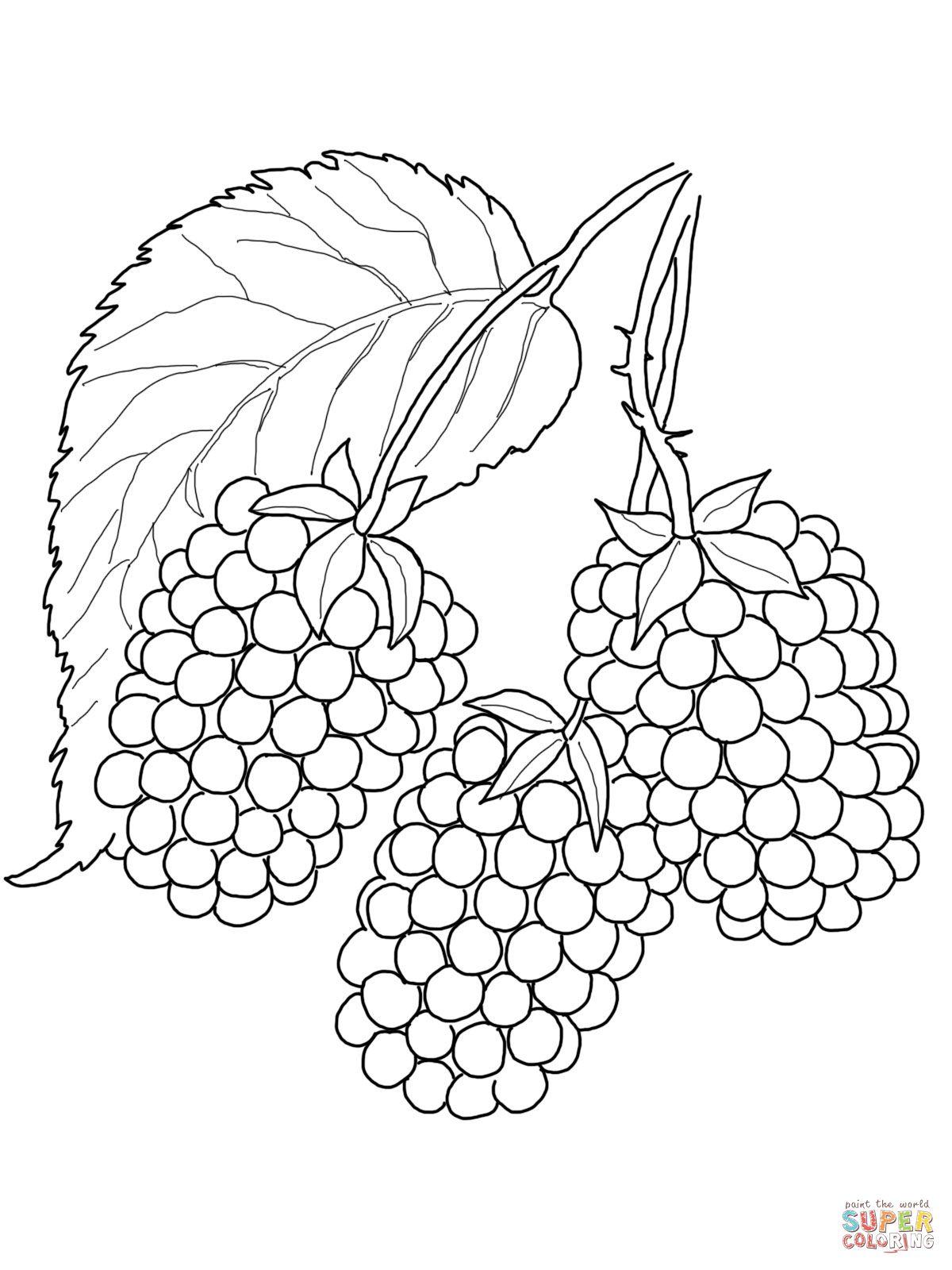 Images For Blackberry Fruit Drawing Fruit Coloring Pages Coloring Pages Free Printable Coloring