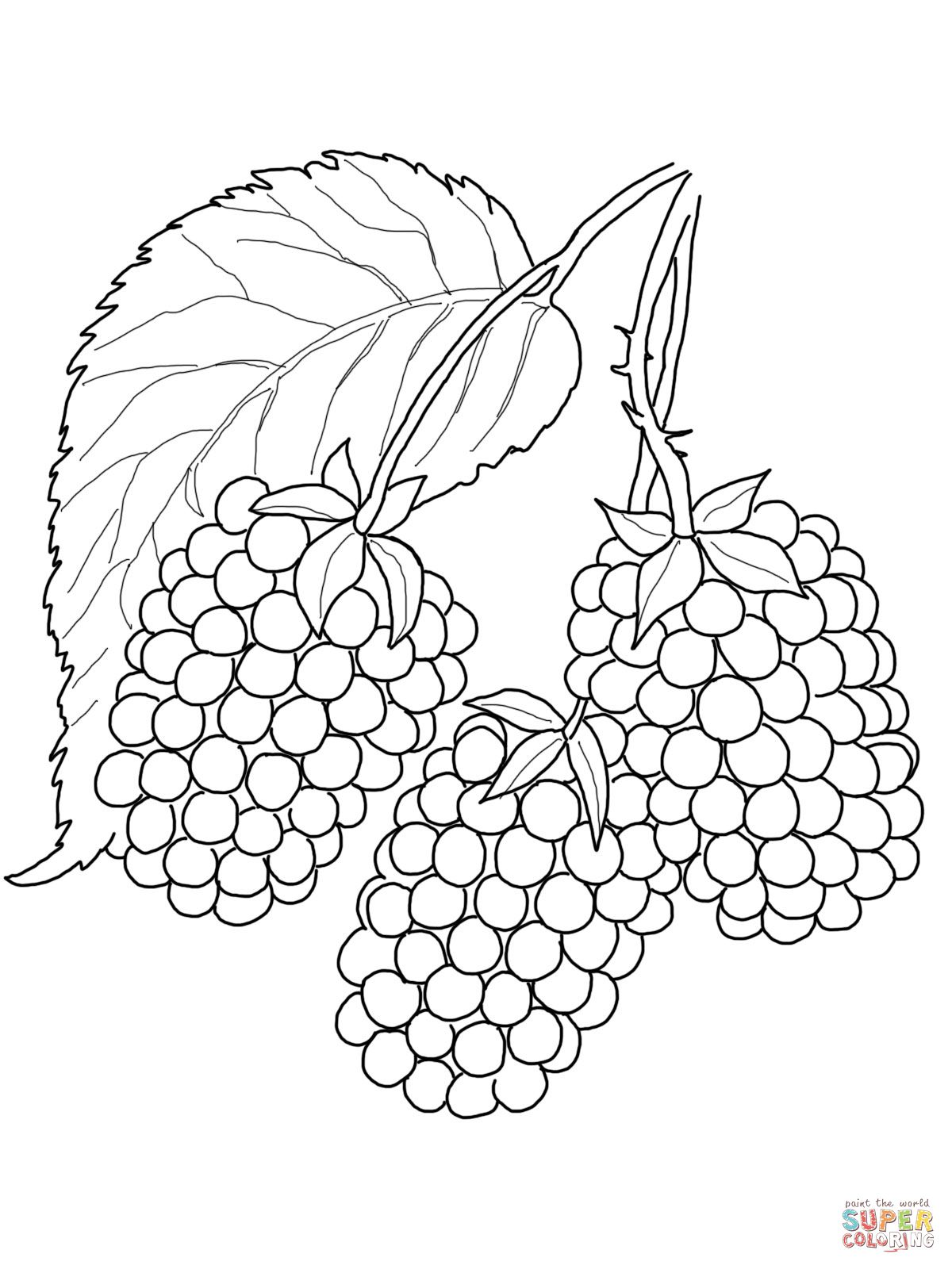 Blackberry Drawing Fruit Coloring Pages Fruits Drawing