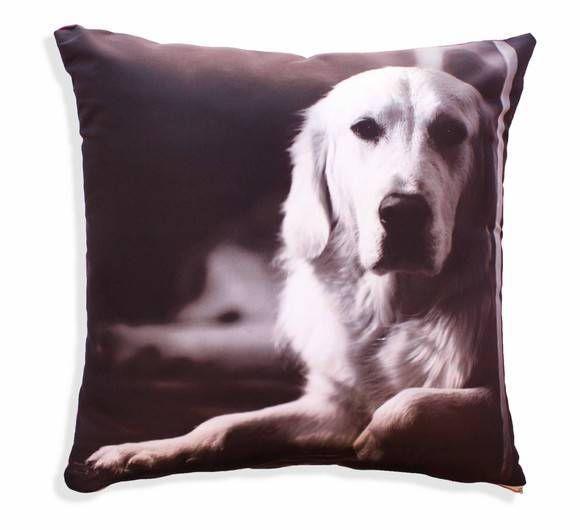 Pra fazer com a foto do seu dog. Ou do seu amor, dos filhos, da sogra ... Tem lá no site : http://www.mundopx.com.br/personalizada/almofada-personalizada-50-x-50-cm-1.html