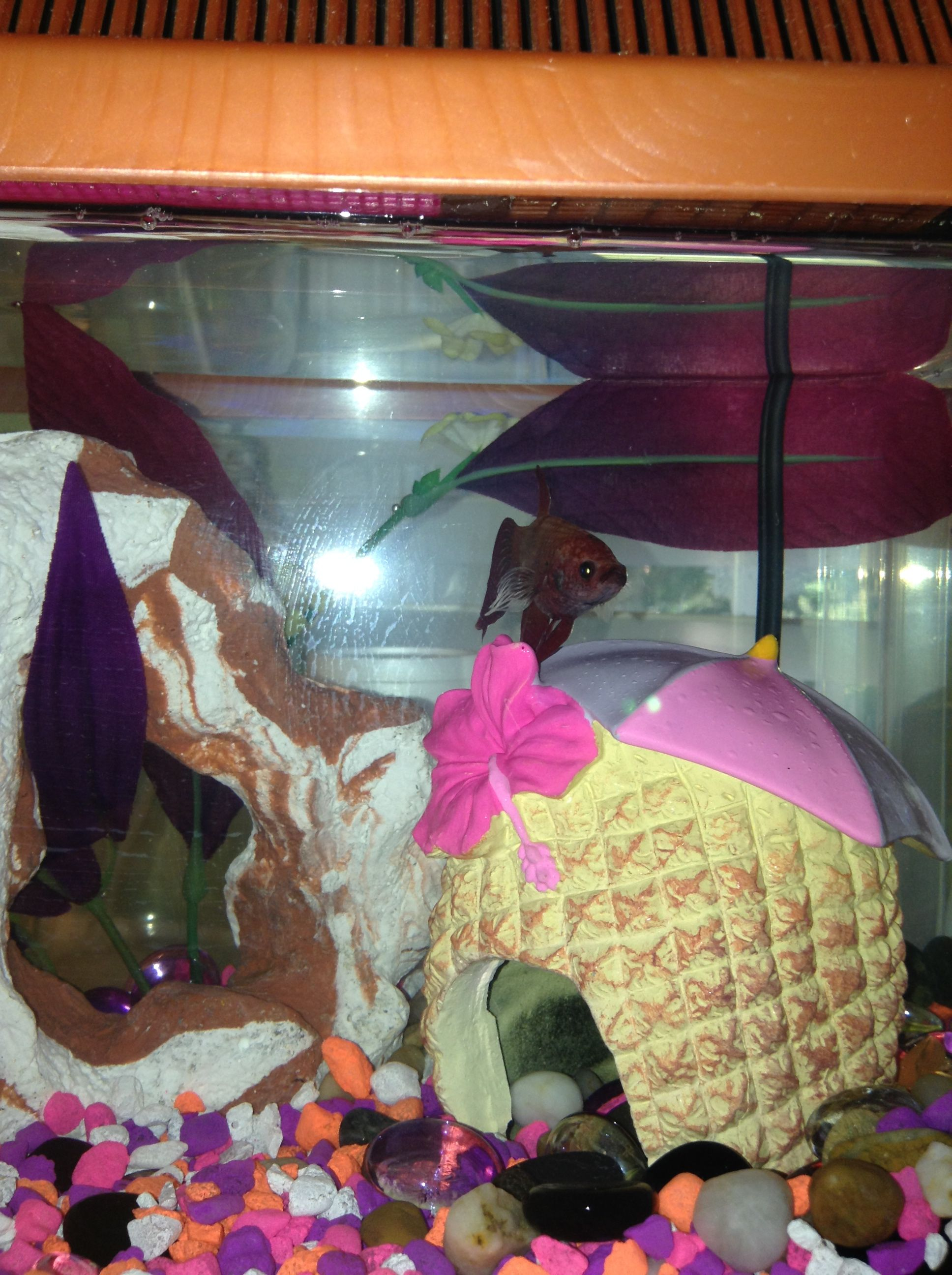 Wanda, With New Decorations