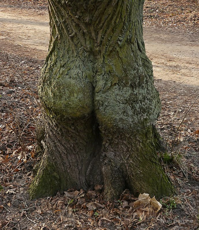 That's one big ass tree