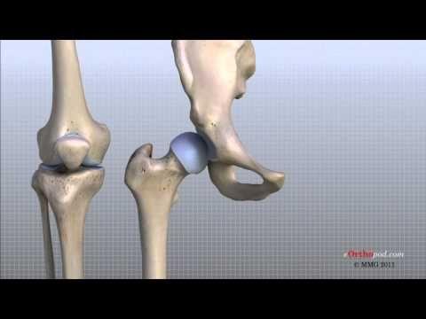 Knee anatomy animated tutorial youtube run pinterest knee anatomy animated tutorial youtube ccuart Choice Image