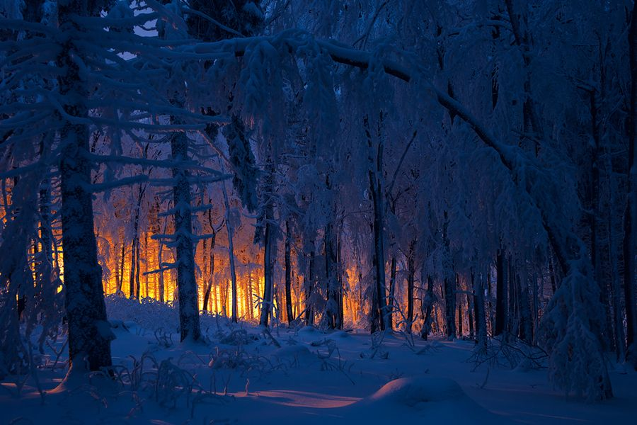 """500px / Photo """"burning forest"""" by Stephan Amm"""