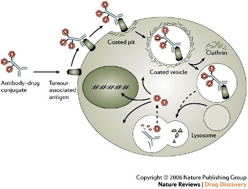 Antibody Drug Conjugate Market Comprehensive Analysis Company