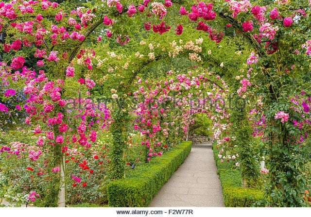The rose garden butchart gardens brentwood bay near victoria the rose garden butchart gardens brentwood bay near victoria vancouver island thecheapjerseys Choice Image
