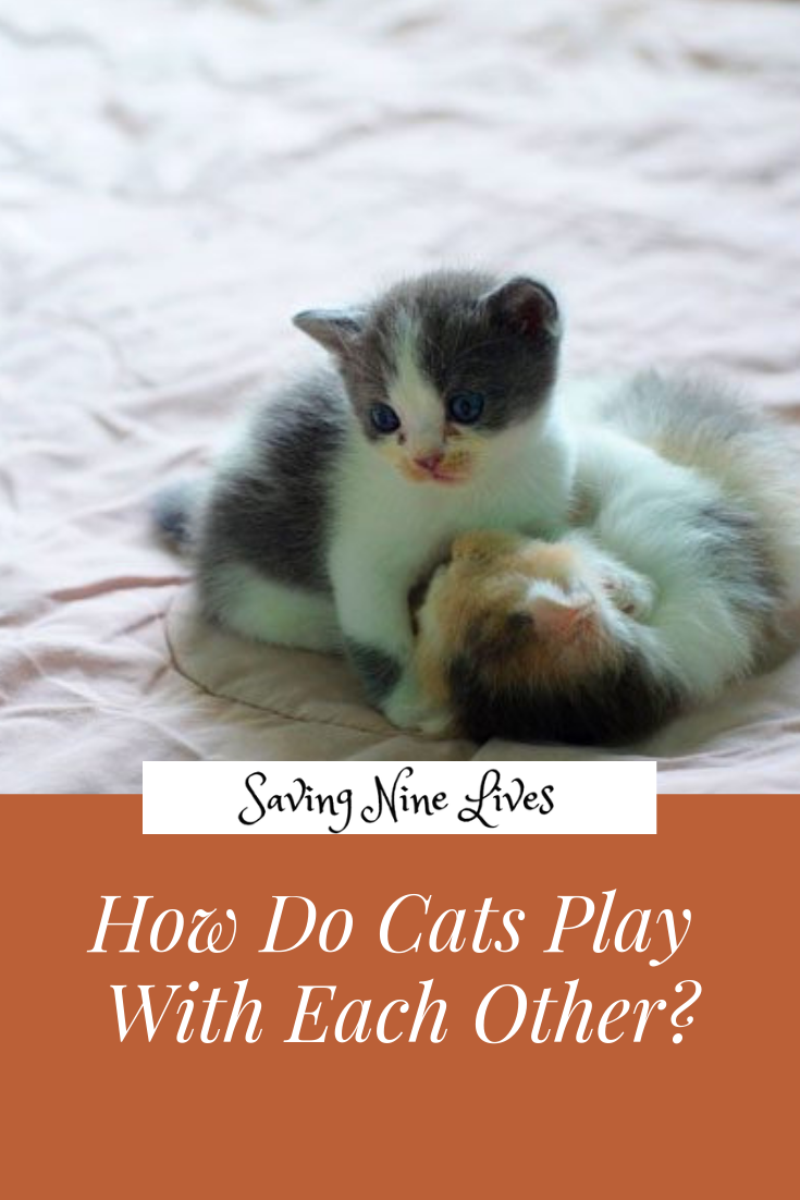 Learn The Difference Between Play Fighting And Real Cat Fights Cat Playing Cats Cat Facts