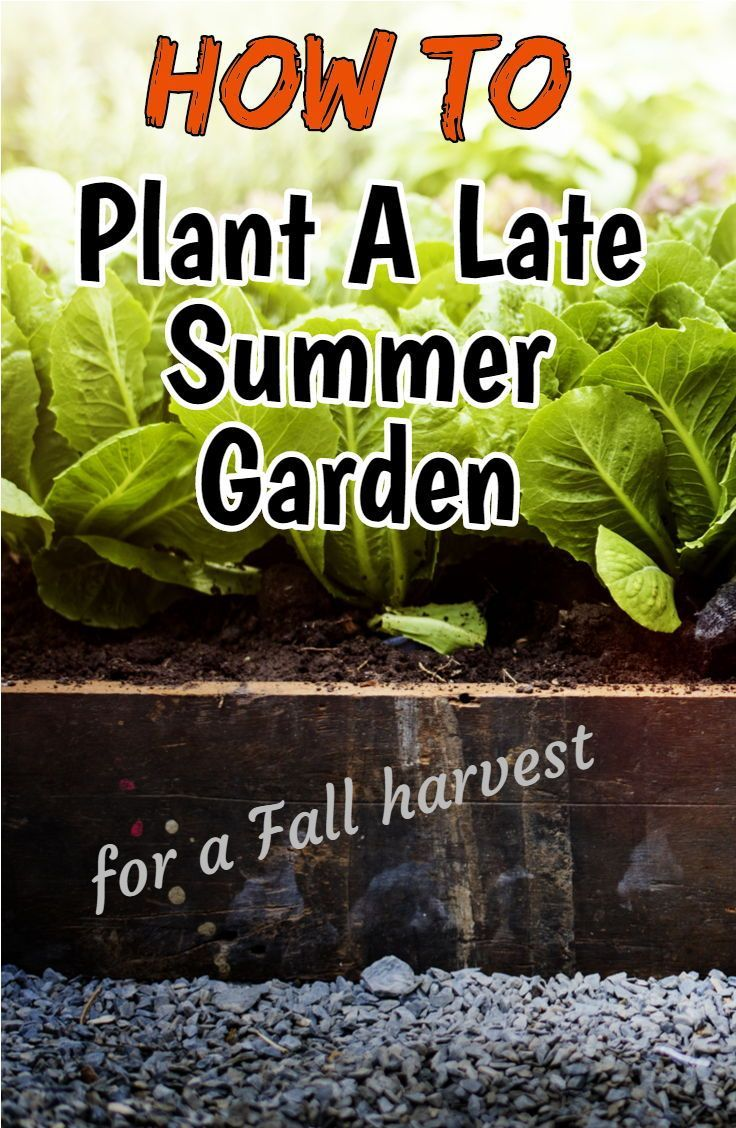 Planting A Late Summer Garden For A Great Fall Crop