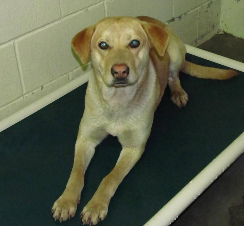 Urgent Lee County Animal Services Adoption Owner