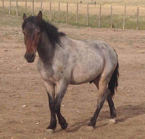 Horse Number: 9901, Image Name:9901b.jpg