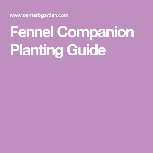 Fennel Companions Fennel Companion Planting 400 x 300