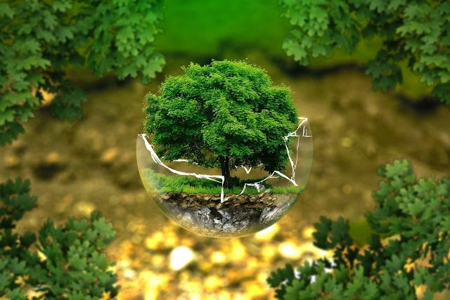 Occasion World Nature Conservation Day In 2020 Organic Water Organic Nutrients Eating Organic