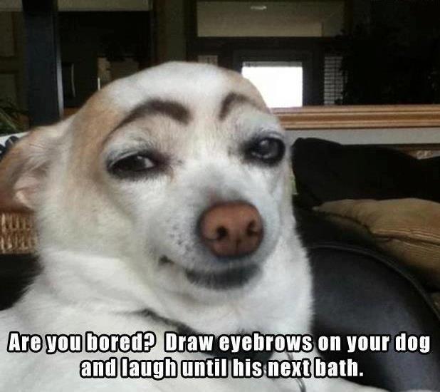 e26dcc7ea915dba077b185ef22788990 dog meme bath, draw memes & comics pinterest meme, bath