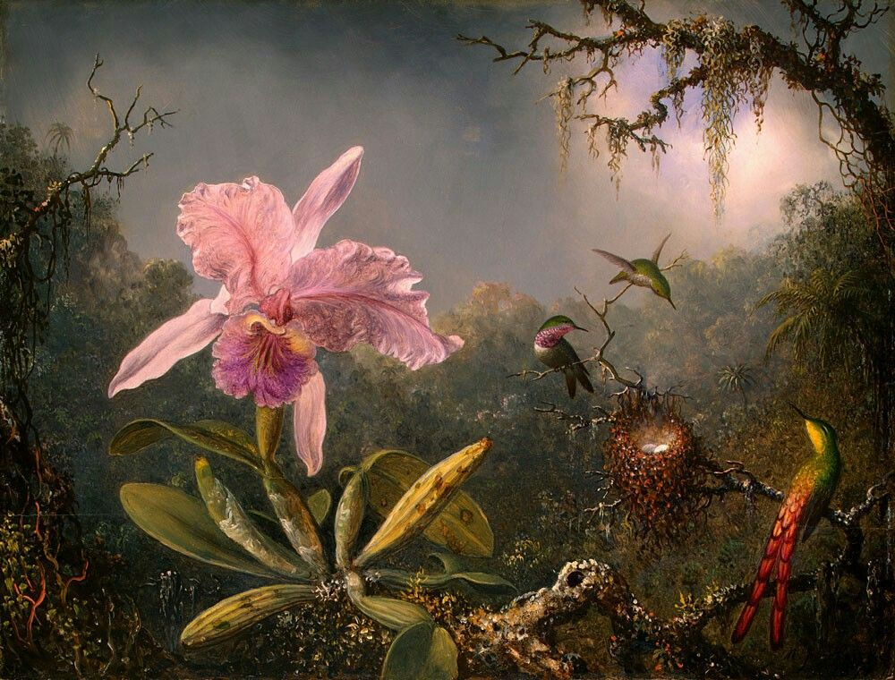 Cattleya Orchid And Three Brazilian Hummingbirds - Martin Johnson Heade