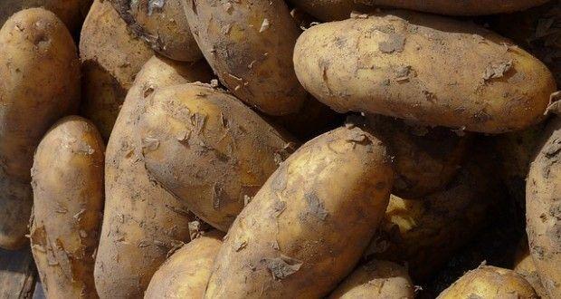 The Best Way To Grow Indoor Potatoes Is In A Garbage 400 x 300