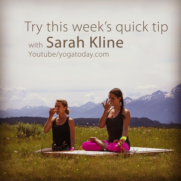In today's quick tip, Sarah Kline offers a detailed instruction on Nadi Shodana pranayama. This breath aims to balance the two hemispheres of the brain, while also lowering the heart rate and reducing stress. For full length classes please visit yogatoday.com #yoga #yogatoday #fitness365 #nadishodhanu #pranayama #sarahkline